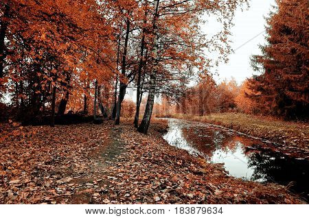 Autumn trees and narrow forest river in cloudy weather. Autumn gothic landscape in pale colors. Autumn forest landscape-orange autumn trees and dry fallen autumn leaves. Vintage autumn landscape