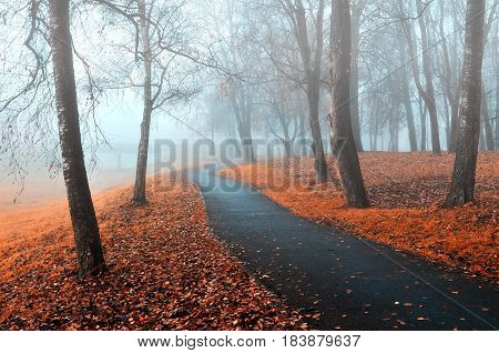 Autumn alley in the fog.Foggy autumn landscape of foggy autumn park with fallen autumn leaves in cold tones-beautiful autumn landscape in cloudy weather with dry orange autumn trees along autumn alley