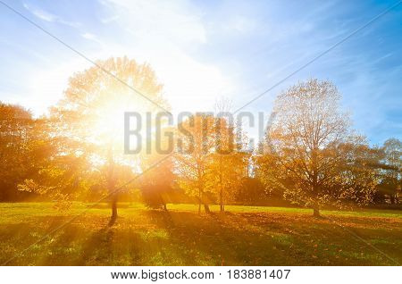 Autumn Landscape -yellowed Autumn Park In Autumn Sunny Evening. Colorful Autumn View Of Sunset Park