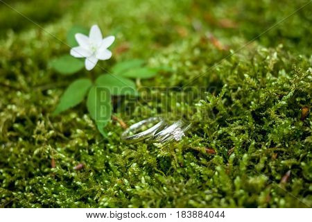 wedding rings lie on the green moss naxt to flower