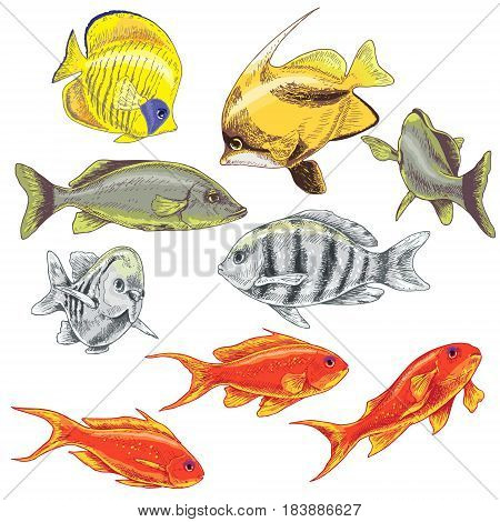 Hand drawn underwater natural elements. Colored fishes set. Variety of colors reef animals isolated on white.