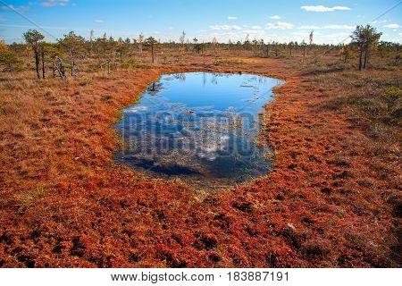 Kemeri National Park peat bog, autumn colors