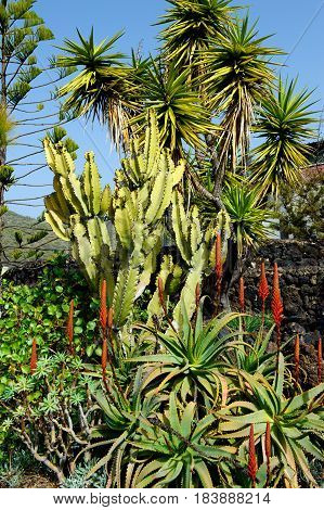 Canaries island Tenerife flora and nature on a sunny day