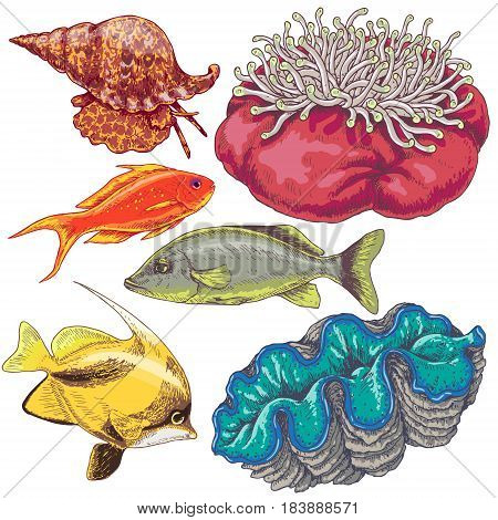 Hand drawn underwater natural elements. Set of reef animals isolated on white background. Colored fishes mollusks and actinia.