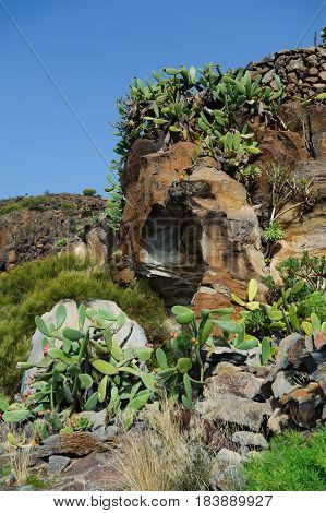 View of cactus Opuntia succulents and lava rocks on trail from Alfareo del Arguayo to Santiago del Teide Tenerife