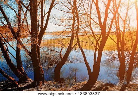 Autumn sunset -colorful autumn view of yellow autumn trees. Autumn landscape with yellow autumn willows near blue river. Sunny picturesque autumn view of autumn sunset nature.