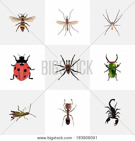 Realistic Arachnid, Emmet, Locust And Other Vector Elements. Set Of Animal Realistic Symbols Also Includes Pismire, Arachnid, Bug Objects.