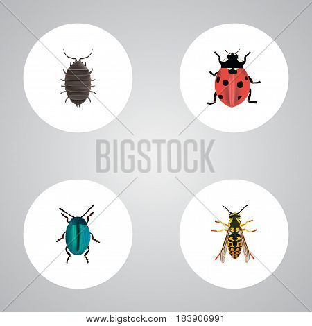 Realistic Bug, Dor, Bee And Other Vector Elements. Set Of Animal Realistic Symbols Also Includes Dor, Beetle, Sting Objects.