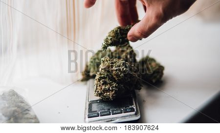 Weighing Marijuana For Sale. The Everyday Life Of A Drug Dealer. The Legalization Of Soft Drugs. Shl
