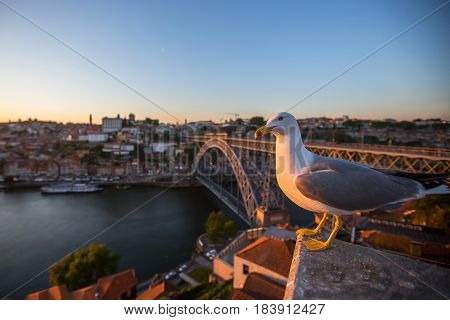Seagull sits on the background of Douro river and Dom Luis I Bridge, Porto, Portugal.