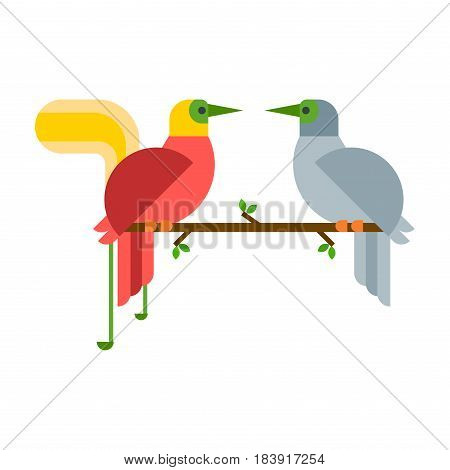 Cartoon tropical peacock couple wild animal bird vector illustration and wildlife cute feather zoo color nature vivid perch tropics fly fauna jungle pretty tail. Wing plumage flying colourful male.