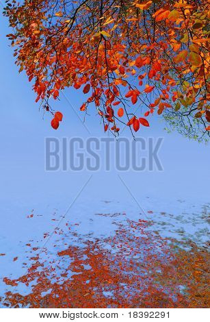 background with colorfull autumn foliage on blue sky with water reflection