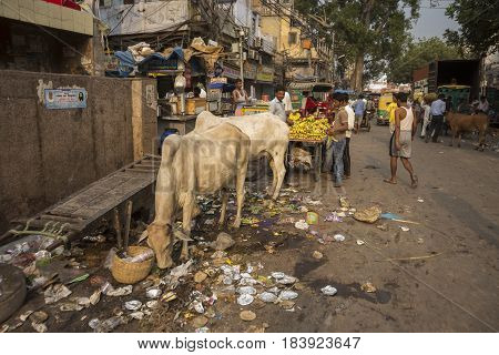 DELHI INDIA - JUN 21 : life of stray cow in spice market in old delhi of Delhi on june 21 2015 india. spice market is biggest spice wholesale