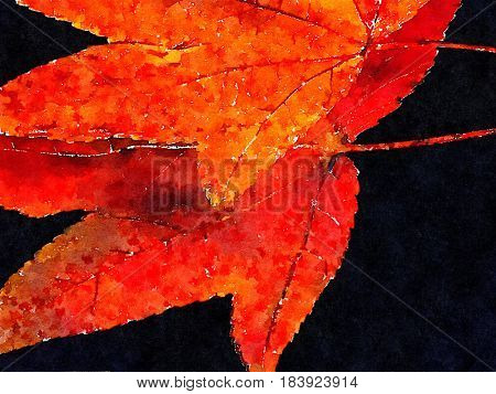 Beautiful Fall leaves On Black background