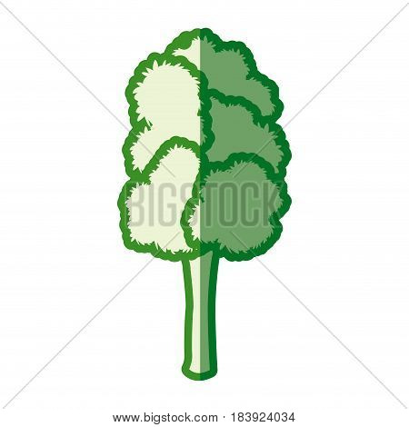 tree foliage botanical nature green silhouette vector illustration