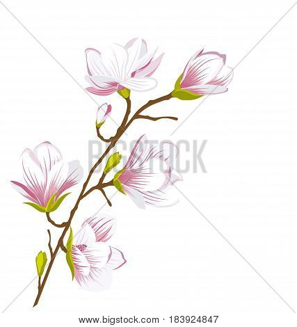 Illustration Cute Magnolia Branch, Blossom Flowers. Summer and Spring Floral Background - Vector