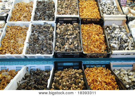 Variety of eatable mushrooms at Boqueria market in Barcelona