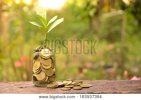 Coins in glass with tree for business and tax season.