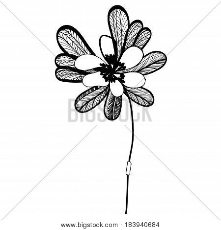 contour, beautiful flower with petals botany plant, vector illustration