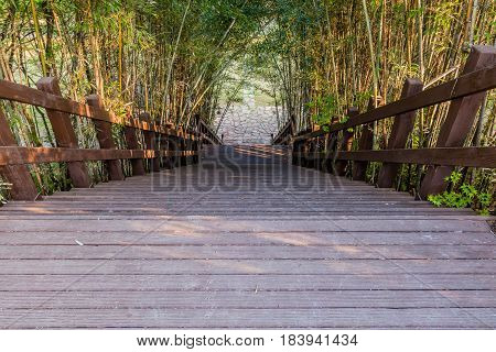 Wooden stairway with bamboo trees arching over from both sides on a sunny morning in South Korea.