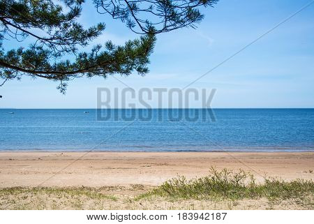 A Quiet Background Of Baltic Sea Coast, Pine Branch And A Sand Shore On Summer Sunny Day Near St. Pe