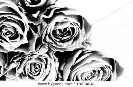 Background with roses in black and white