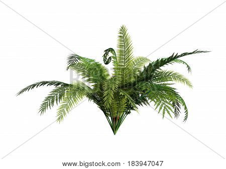 3D rendering of a giant fern plant isolated on white background