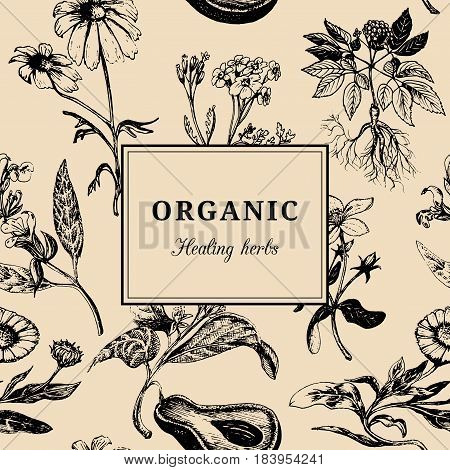 Hand drawn vector herbs. Organic healing plants background. Officinalis, medicinal, cosmetic leaves, seeds, flowers sketched illustration. Vintage floral card or poster.