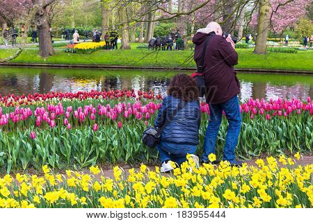 Lisse The Netherlands - 11 April 2017 - Tourists enjoy taking pictures of colorful tulips at Keukenhof known as Garden of Europe in Lisse The Netherlands or Holland on April 11 2017.