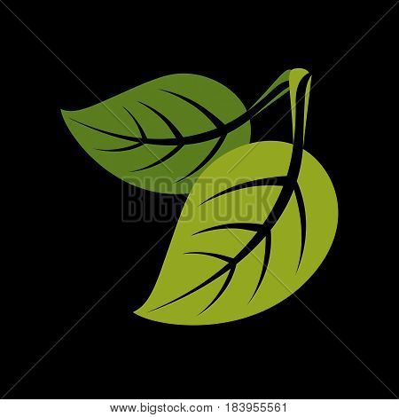 Two Vector Flat Green Leaves. Herbal And Botany Art Symbol, Spring Season Stylized Ecology Icon. Env