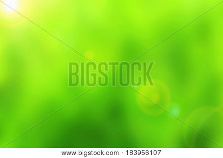Beautiful green Nature Bokeh.Blurred background and sunshine