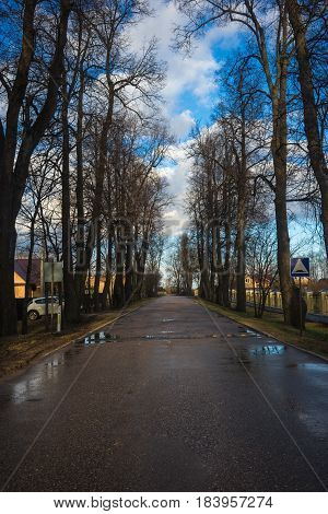 Alley With Aspen Trees Near Moscow