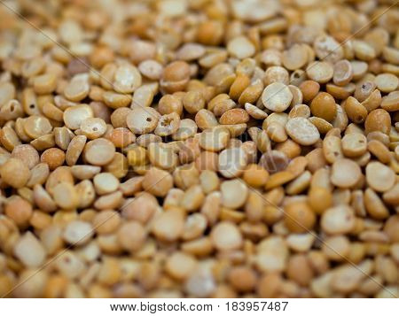COLOR PHOTO OF CHICKPEA OR CHICK PEA (CICER ARIETINUM)