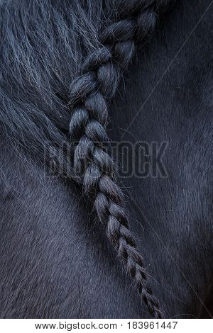 Photo of horse mane with pigtail. Animals and nature.