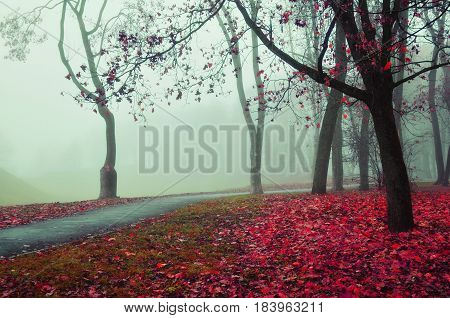 Autumn alley in dense fog - foggy autumn landscape with bare autumn trees and red fallen leaves. Soft focus applied.