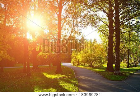 Autumn natural view autumn park in sunset. Sunny autumn landscape - colorful autumn nature in nice sunny weather at autumn sunset, autumn landscape view