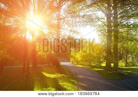 Autumn background. Autumn natural view of autumn park in sunset light. Sunny autumn landscape of colorful autumn nature in nice sunny weather at autumn sunset - autumn landscape park view