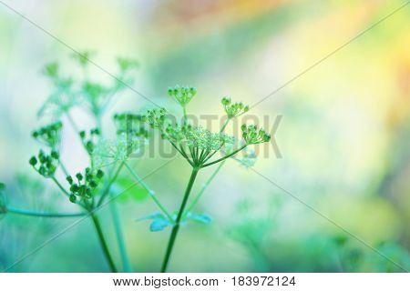 Closeup photo of a gentle green flowers over blurry pastel background, spring season, beauty of wild nature