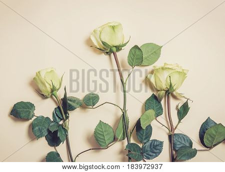 Beautiful roses on beige background. Vintage style