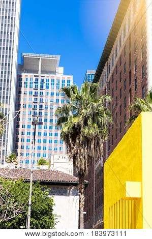 Downtown Los Angeles skyline with blue sky and palm trees. vertical photo