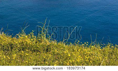 Fresh Green Gras On The Sea