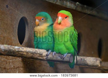 love colorful parrots
