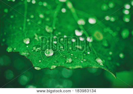 Green leaf with water drops, macro, nature background