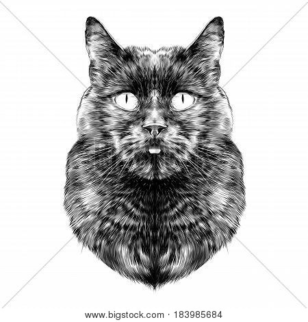 cat breed Bombay male is the head symmetrical sketch vector graphics black and white drawing