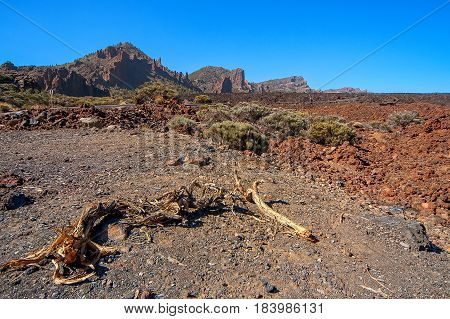 Unusual sights at the foot of the volcano El Taide