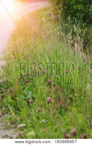 Wild flowers in city park in sunlight