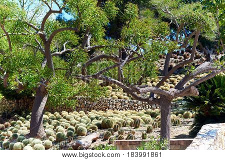 Tropical plants in the Dino Park of Algar. Southern Spain
