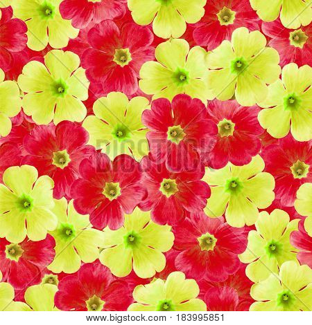 Seamless infinite floral background. For design and printing. Background of natural red and yellow Violets. Nature.
