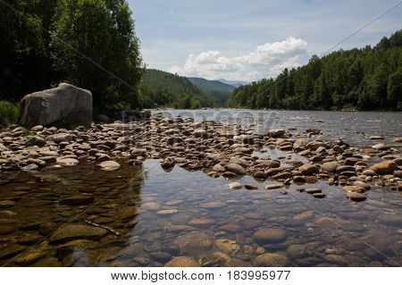 Shallow river in the wild forest at summer