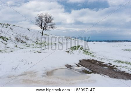 Ukrainian spring landscape with lonely flowering apricot tree on a hill after snow storm in April